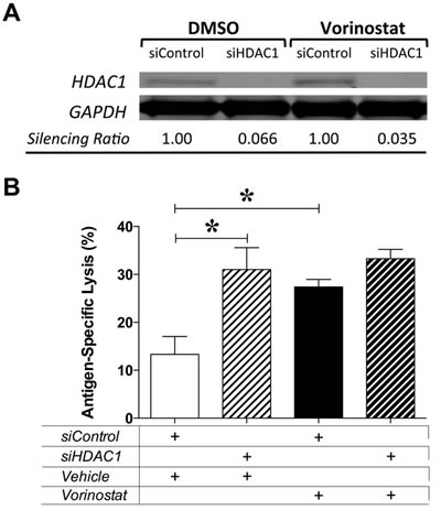 Vorinostat-induced immunogenic modulation of MDA-MB-231 carcinoma cells is mediated by HDAC1.