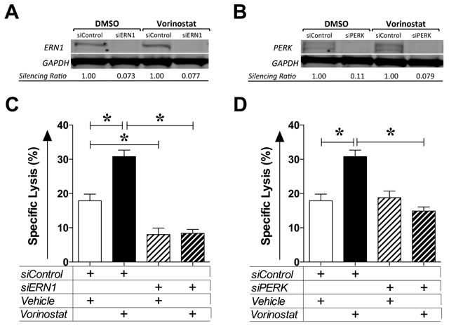 Vorinostat-induced immunogenic modulation is mediated by the unfolded protein response.