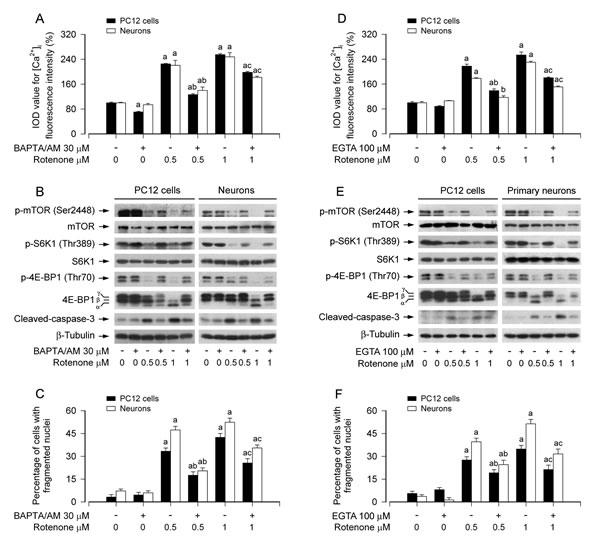 Rotenone elicits neuronal apoptosis