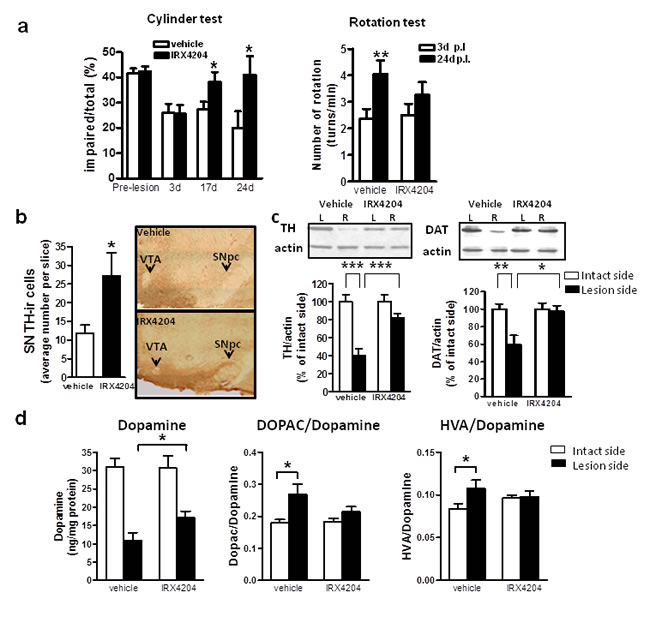 Oral administration of IRX4204 improves motor asymmetry and dopamine neuron loss in a rat model of PD.