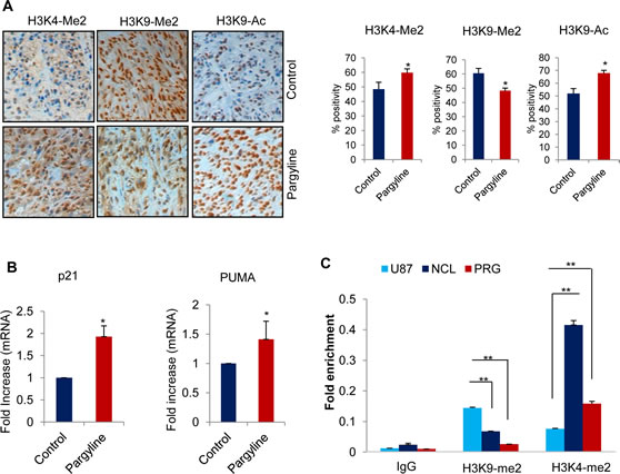 Figure6: Pargyline treatment increased the global H3K4 methylation and H3K9 acetylation marks and reduced the H3K9 methylation in xenograft tumors.