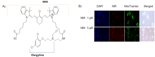 Near–infrared dye conjugated to MAO A Inhibitor clorgyline (NMI) is localized to the mitochondria of cancer cells.