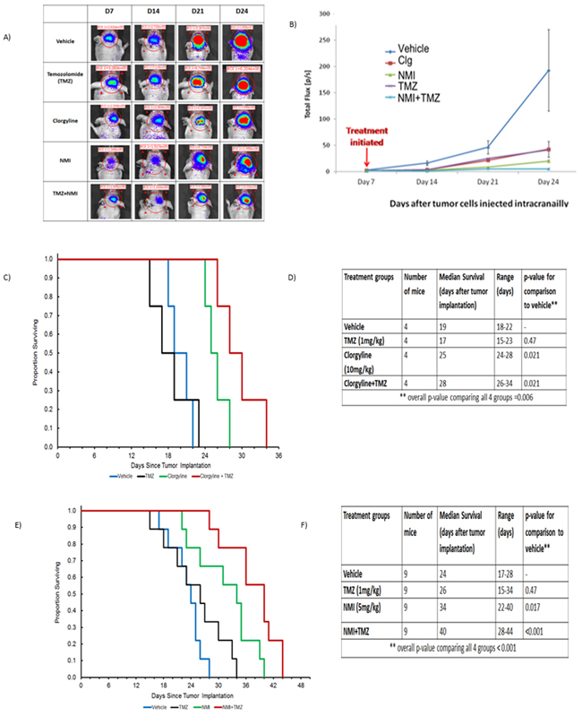 Clorgyline, NMI or the combination with TMZ reduces tumor progression and increases the survival of TMZ-resistant tumors.