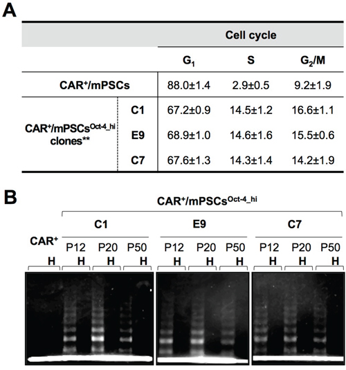 Phenotypic alterations in CAR+/mPSCsOct-4_hi.