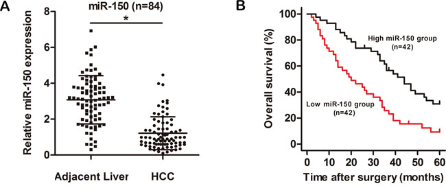 miR-150 is significantly downregulated in HCC tissues.