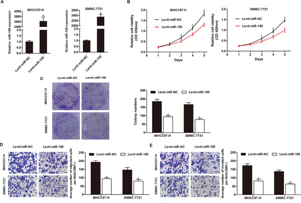 miR-150 inhibits HCC cell proliferation, colony formation, migration and invasion in vitro.