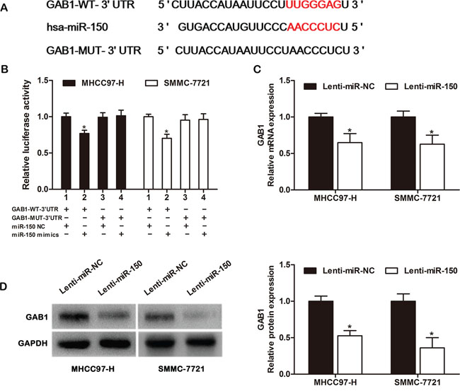 GAB1 is a direct target of miR-150 in HCC cells.