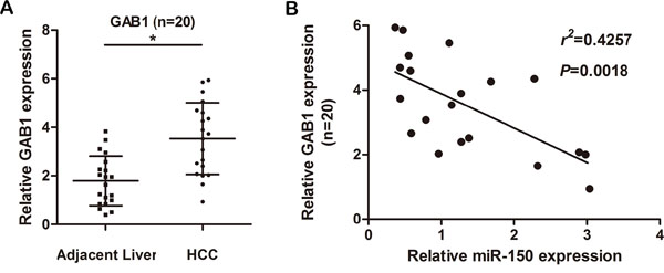 GAB1 levels are inversely correlated with miR-150 levels in HCC tissues.