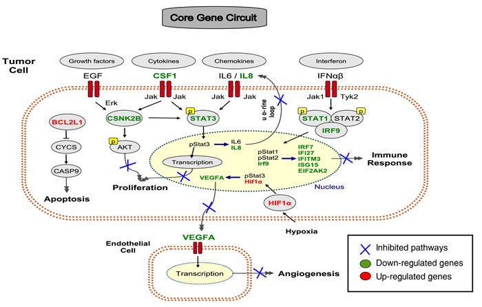 A core gene circuit of genes putatively involved in drug-induced MCF7 cell differentiation.
