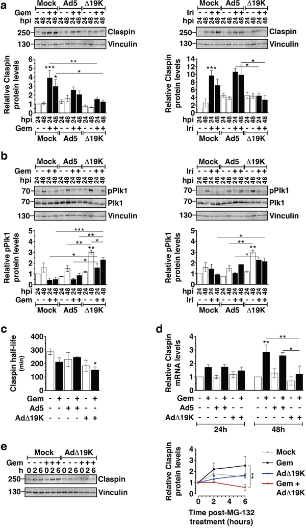 AdΔ19K inhibits drug-induced accumulation of Claspin through increased degradation and decreased synthesis.