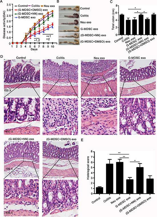 G-MDSC exo attenuate the severity of DSS-induced colitis.