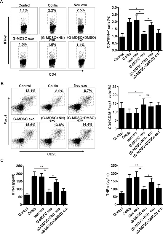 G-MDSC exo prevent the Th1 cell response and expand Tregs in murine experimental colitis.