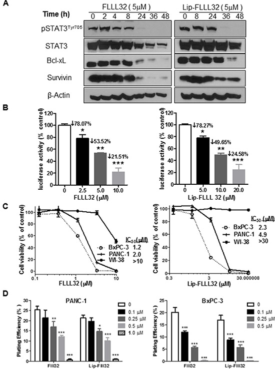 Lip-FLLL32 inhibits pancreatic cancer cell growth in vitro in a STAT3 dependent way.