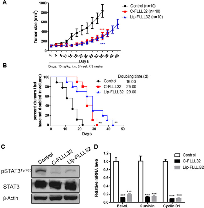 Lip-FLLL32 inhibits pancreatic cancer xenograft growth in vivo in a STAT3 dependent way.