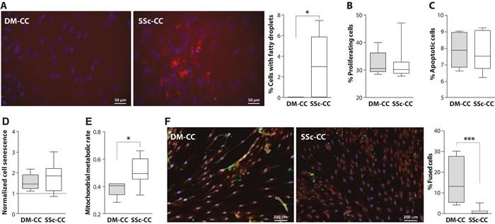 Cellular activities in deltoid (DM) and subscapularis (SSc) -derived muscle cell culture (CC).