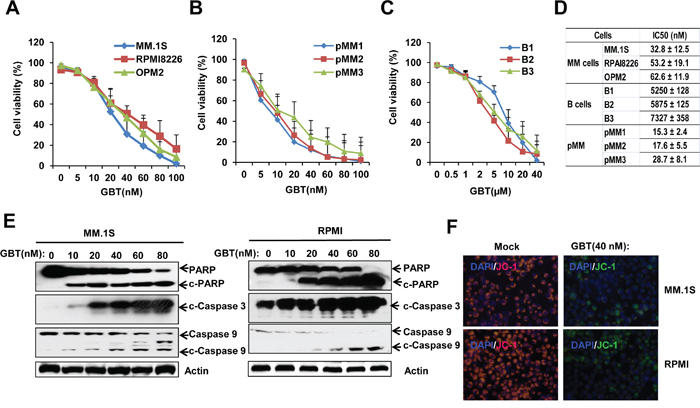 GBT reduced cell viability and induces apoptosis in MM cells.