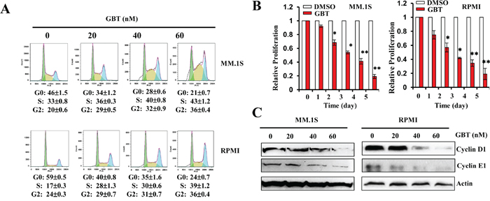 GBT inhibits MM cell proliferation and induces cell-cycle arrest.