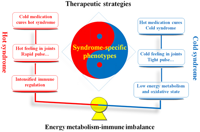 Similarities and differences between RA patients with hot and cold syndromes with regard to the clinical manifestations, therapeutic strategies and molecular mechanisms.