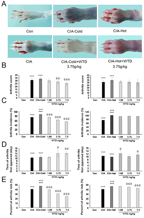 Effects of WTD on the severity of arthritis in CIA rats.