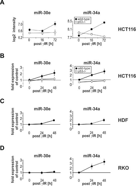 γIR induces miR-30e expression only in senescent HCT116 wild-type cells and HDF, but not in apoptotic p53-deficient HCT116 and RKO cells.