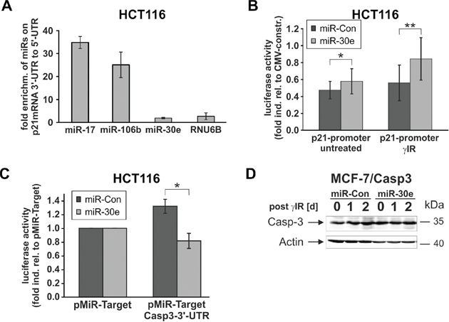 MiR-30e exerts translational and transcriptional effects on caspase-3 and p21 expression, respectively.