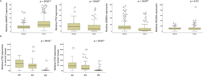 (A) The mRNA expression levels of ANAPC1, ETS2, SORBS1, and POLR2A genes and (B) ETS2 mRNA expression by the rs461155A>G genotypes, in tumor and non-malignant lung tissues.
