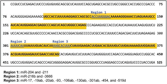 Nucleotide sequence of the 3' untranslated region (UTR) of CHD5.