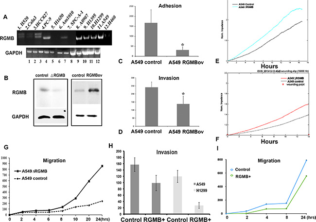 Manipulation of RGMB alters the malignant behavior of lung cancer cells in vitro.