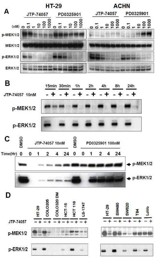 Rapid shift to and sustained state of u-MEK form by JTP-74057, but not PD0325901.