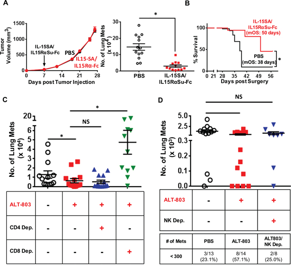 IL-15SA/IL-15RαSu-Fc shows significant anti-metastatic activity, dependent on CD8+ T and NK cells, and prolonged the survival of mice in the 4T1 breast tumor model.