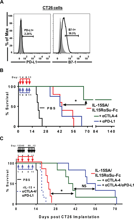 IL-15SA/IL-15RαSu-Fc prolongs the survival of mice against experimental pulmonary metastasis of CT26 colon carcinoma cells and in combination with checkpoint inhibitors, driven by anti-CTLA-4, resulted in synergistic enhancement of anti-tumor efficacy.