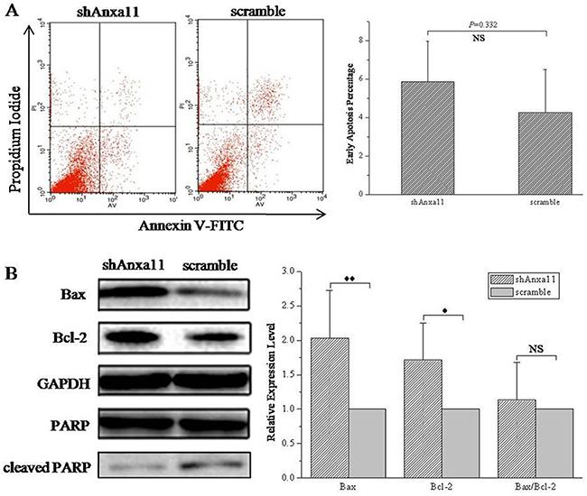 Anxa11 knockdown on Hca-P apoptosis.