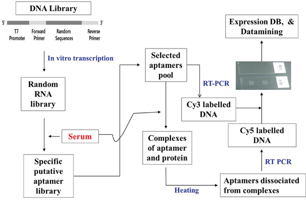 General method for the selection of 1,149 aptamers.