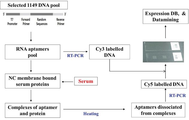 Analysis of DNA array using 1,149 aptamers.