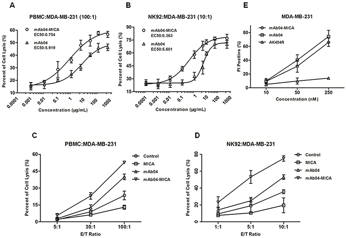 mAb04-MICA enhanced the cytotoxic effect of PBMC/NK92 cells compared to mAb04, and maintained the CDC effect.