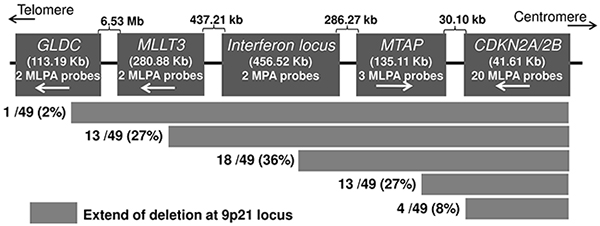 Deletion patterns at the CDKN2A/B locus detected with MLPA in melanoma cell lines.