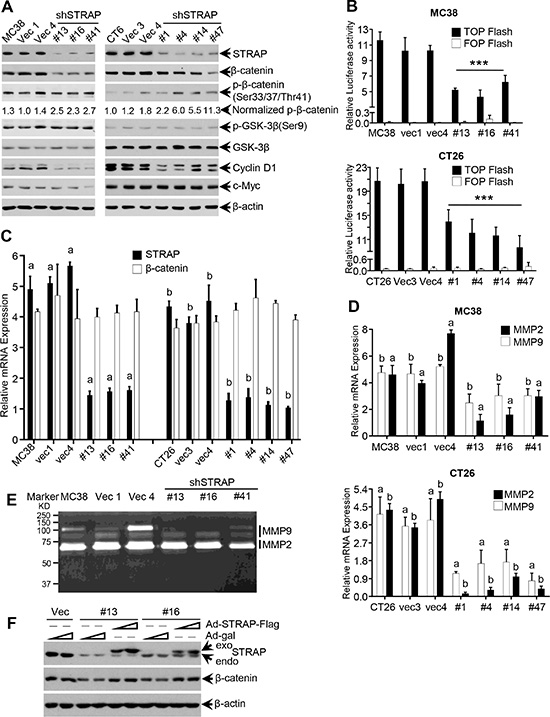 Regulation of β-catenin expression and signaling by STRAP in CRC cell lines.