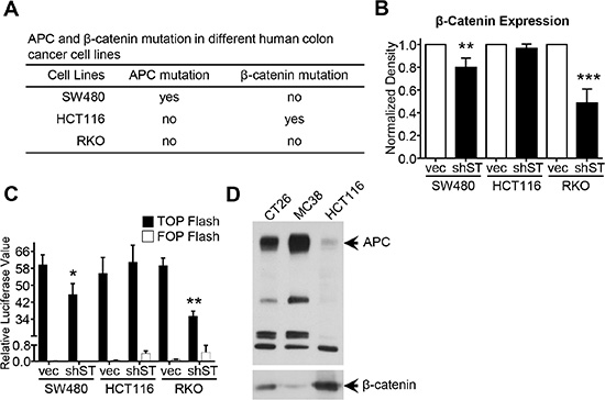 Role of β-catenin mutation and APC deletion on STRAP induced stabilization of β-catenin.