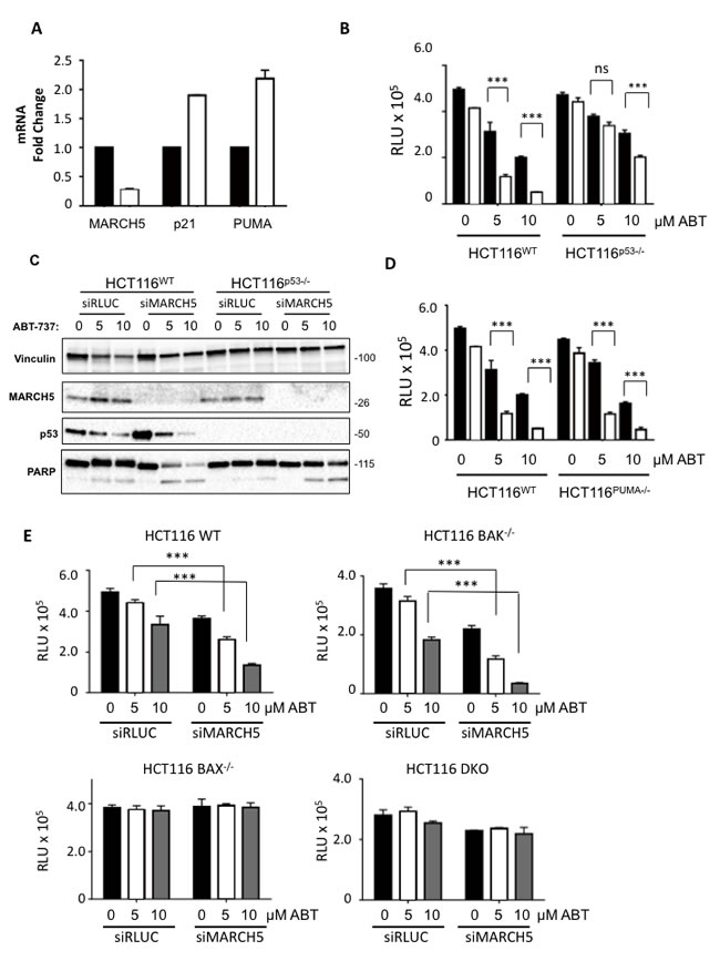 MARCH5 depletion upregulates p53 transcriptional targets and sensitizes cells to p53- and BAX-dependent apoptosis