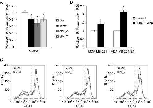 MTHFD2 depletion reduces N-cadherin mRNA expression.