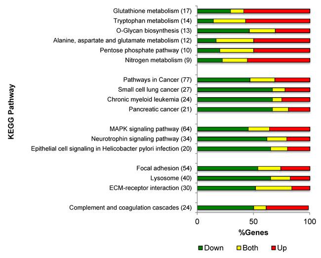 PKCδ regulation of gene expression pathways.