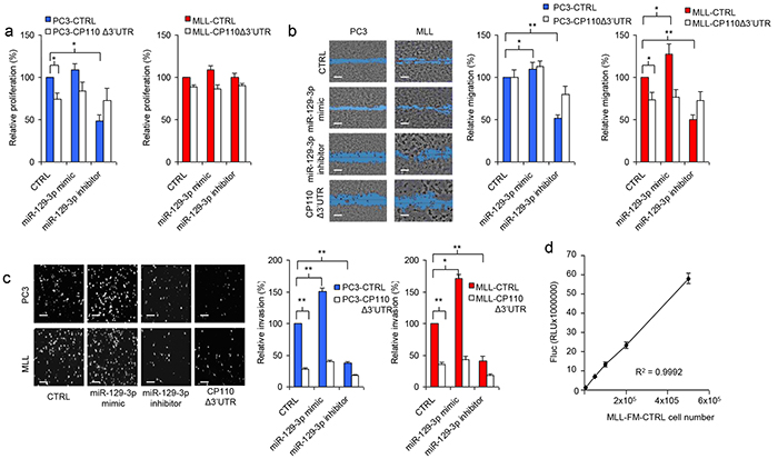 miR-129-3p and CP110 regulate cell invasion.