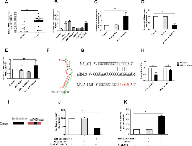 MALAT1 reduces miR-124 expression in breast cancer.