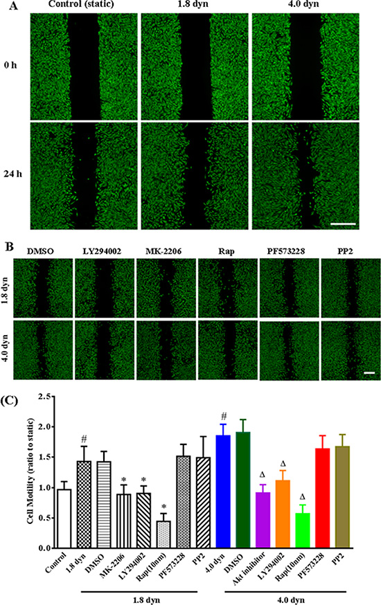 Evaluation of low shear stress (LSS) on cell motility and the roles of PI3K/Akt/mTOR pathway in cell motility by wound healing assay.