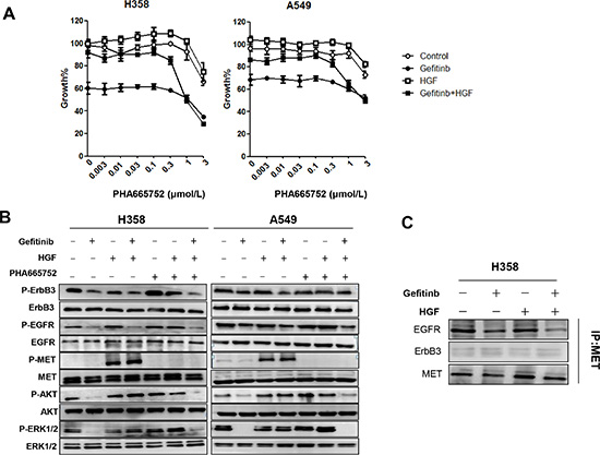 HGF reduces sensitivity to gefitinib by directly restoring the phosphorylation of Akt and ERK1/2.