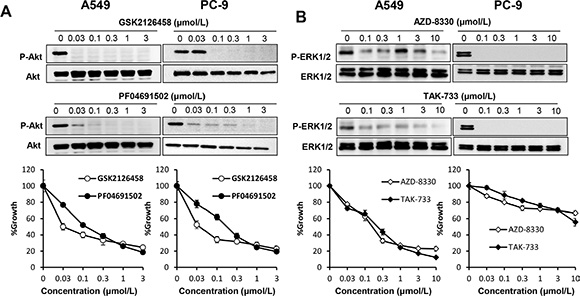 Both PI3K/Akt and MAPK signaling pathways are essential in lung cancer cells harboring wild-type EGFR.