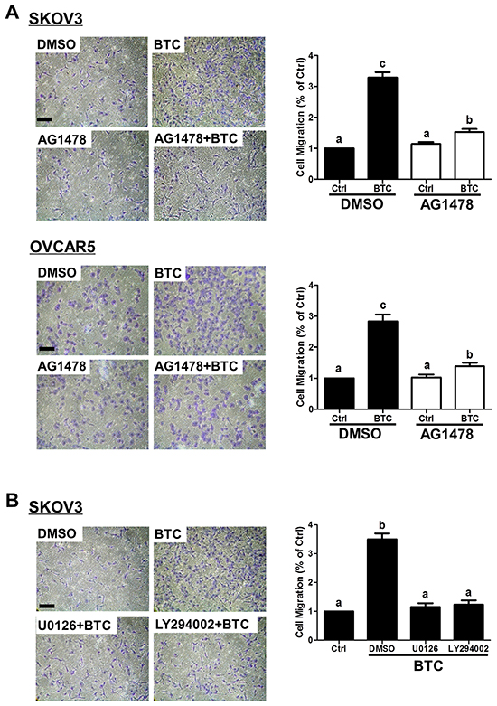 Betacellulin-induced ovarian cancer cell migration requires EGFR, MEK-ERK and PI3K-Akt signaling.