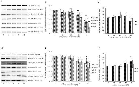 Expression of cyclin D1, cyclin D3, CDK2, CDK4 and cyclin-dependent kinase inhibitors (p21 and p27) after treatment of MCF-7 cells with levomepromazine (a-c) or buclizine (d-f) for 72 h as analyzed by Western blot.