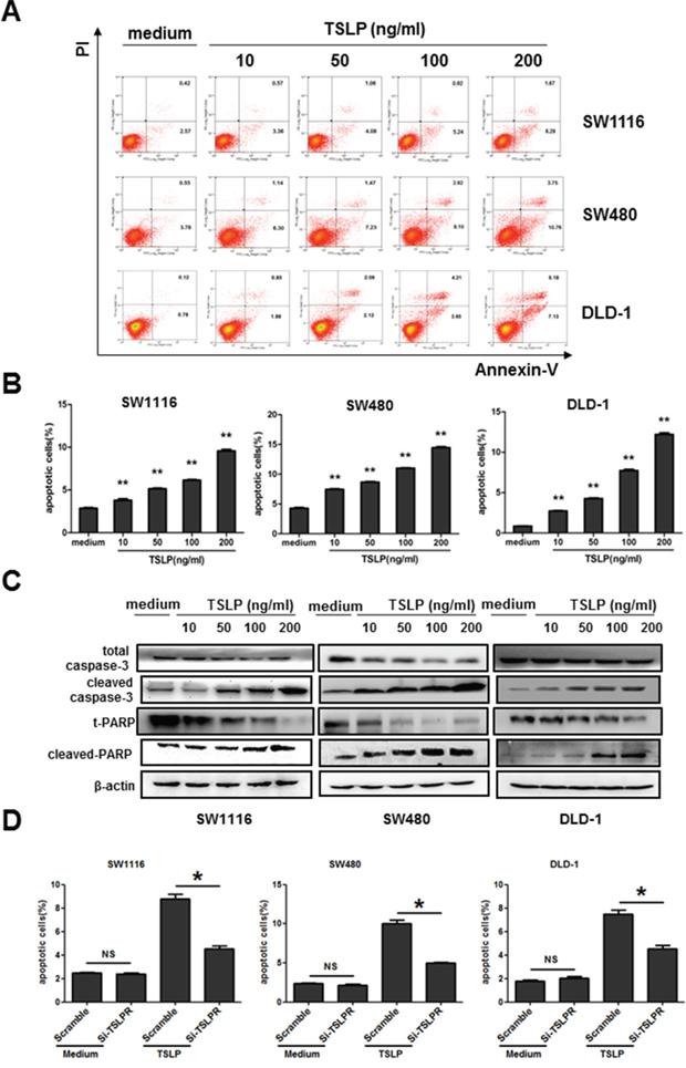Exogenous TSLP treatment promotes apoptosis of colon cancer cells.