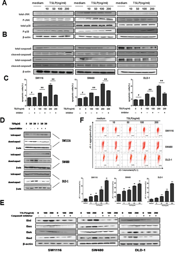 TSLP activates both extrinsic and intrinsic apoptosis pathway, and the apoptosis-promoting effect of TSLP is largely dependent on caspase-8-initiated extrinsic pathway.